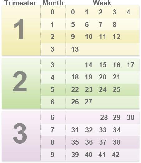 pregnancy_timing_chart